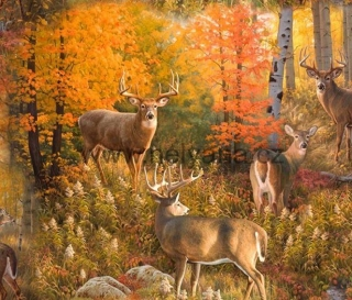 DEERS IN AUTUMN