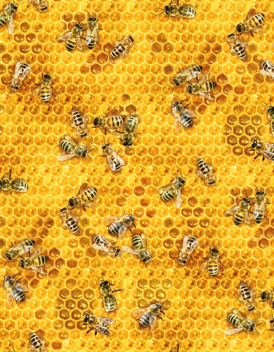 slide /fotky71305/slider/510-honey.jpg